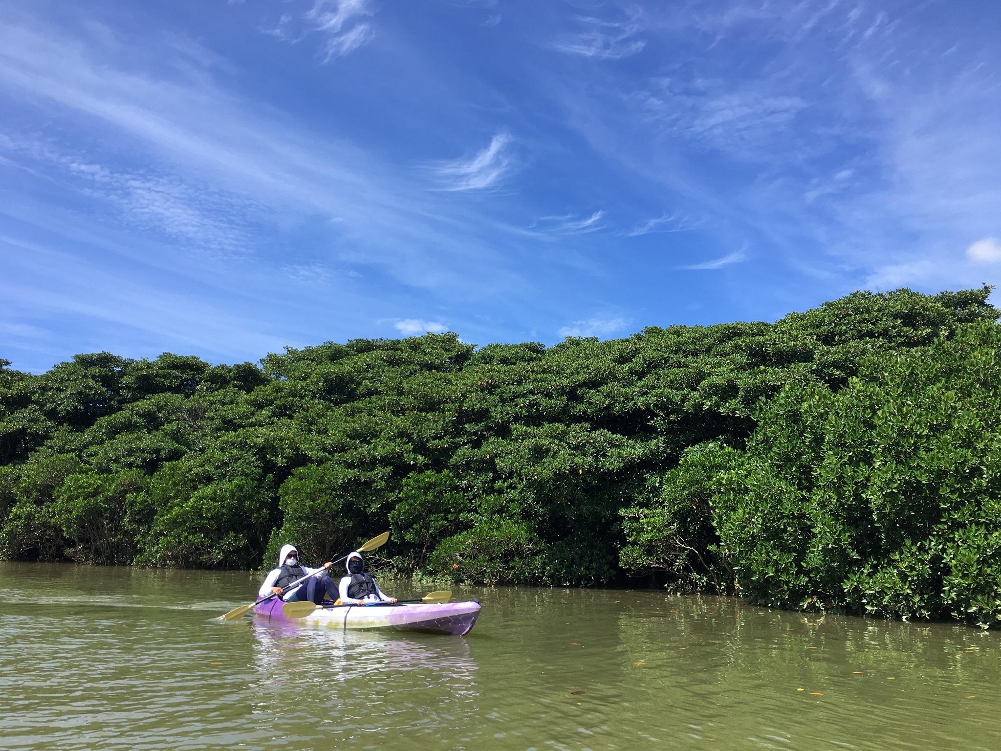 マングローブの中をカヌーで進む 石垣島で旅行