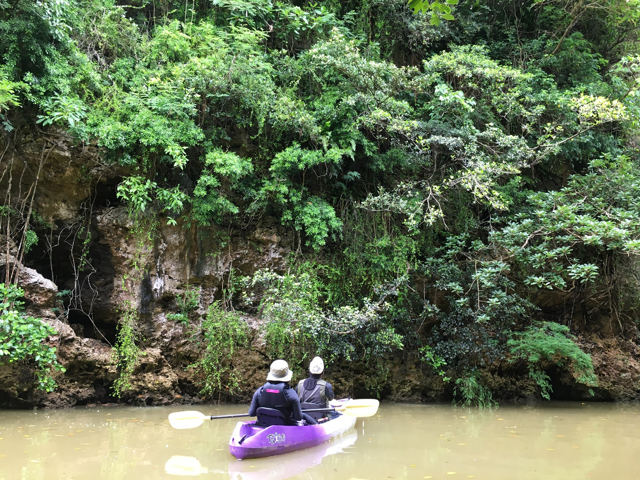 夫婦で石垣島でマングローブカヌー|マングローブジャックを求めて