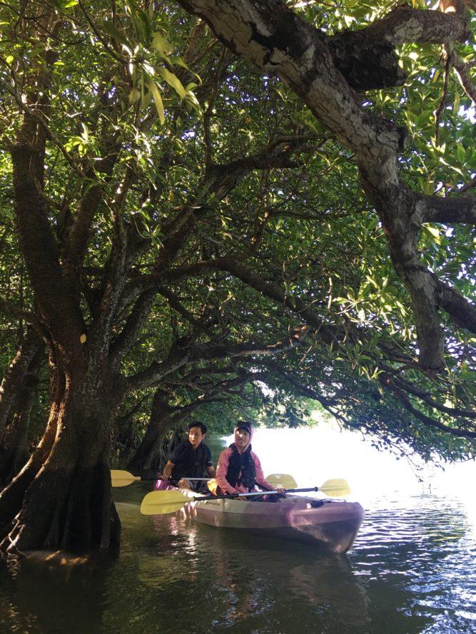 地元ゲストと石垣島のマングローブカヌー|マングローブの枝下へ