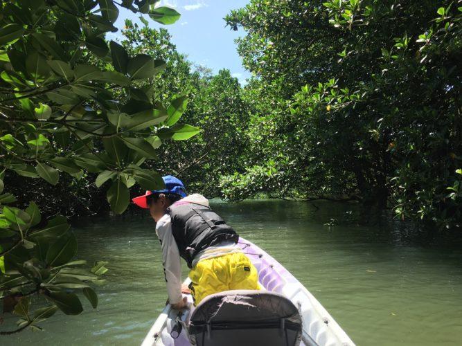 川をのぞき込む息子さん。石垣島のマングローブカヌー