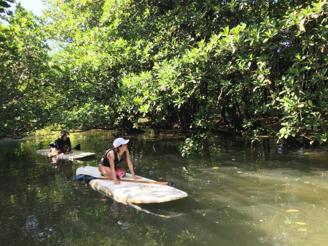マングローブSUPで森の中へ|石垣島のアクティビティ