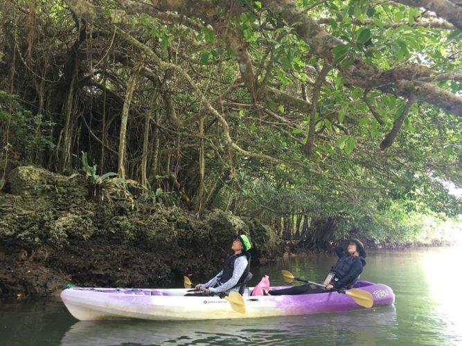 石垣島のガジュマルとマングローブカヌー