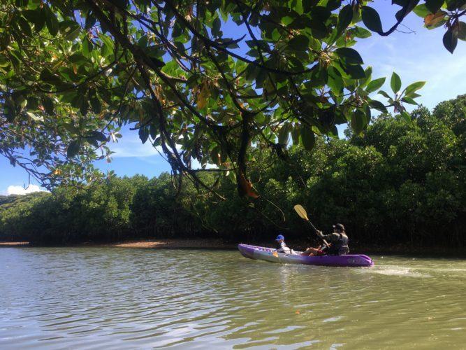 家族旅行でマングローブカヌー
