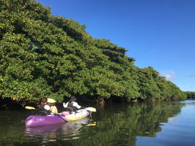 石垣島の自然に囲まれて、マングローブカヌー