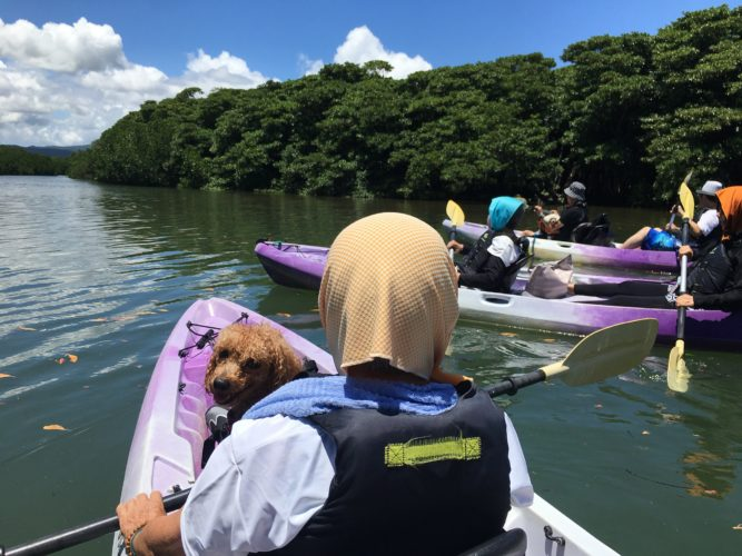ワンコと一緒に石垣島でマングローブカヌー