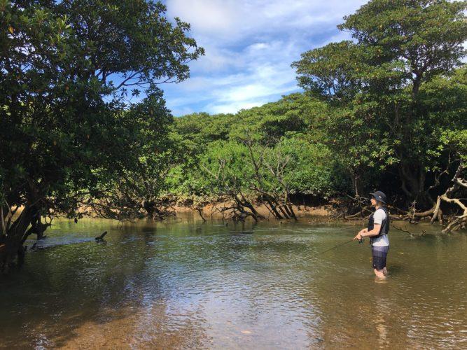 マングローブの中で釣り
