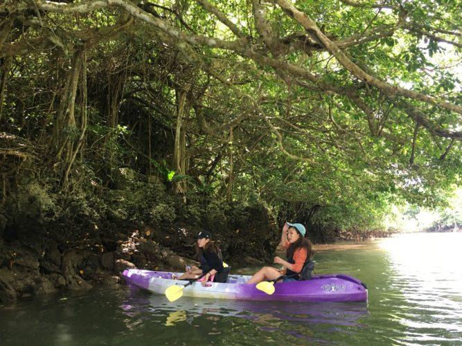 宮良川のマングローブカヌーでガジュマルへ