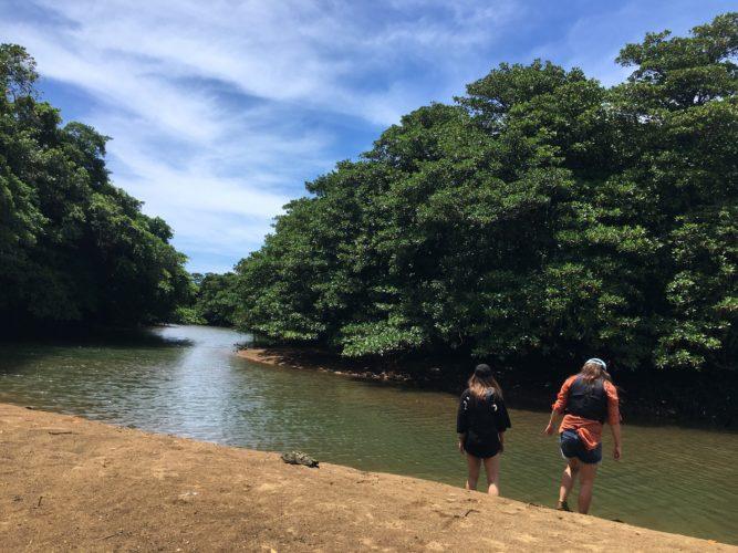 石垣島のマングローブを歩く