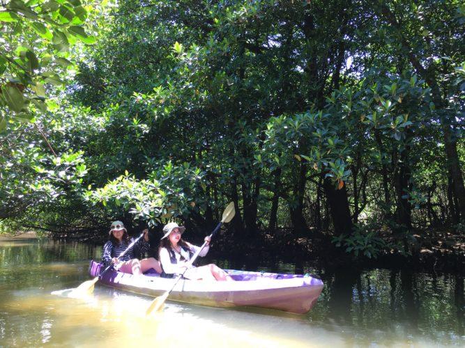 マングローブの水路をカヤックで進む