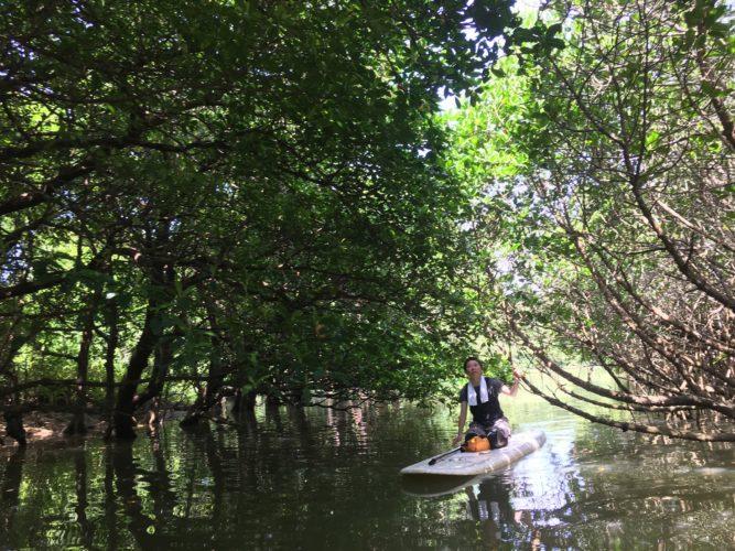マングローブSUPで石垣島のマングローブへ