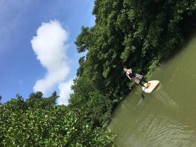 青空とマングローブと石垣島のSUP