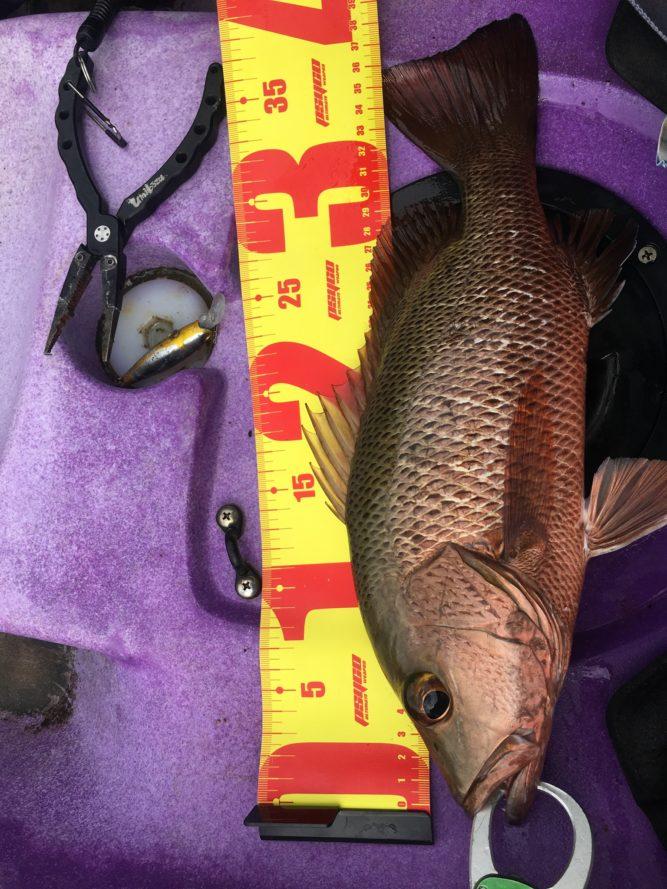 カヤックフィッシングで釣った35cmマングローブジャック|石垣島ガイドCHORO