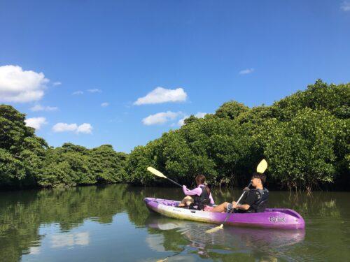青空と緑のマングローブカヌー 石垣島ガイドCHORO