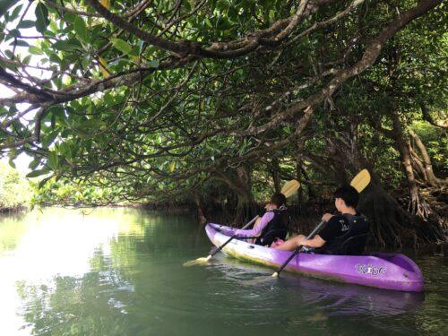 マングローブの中でカヌーに揺られて小休止